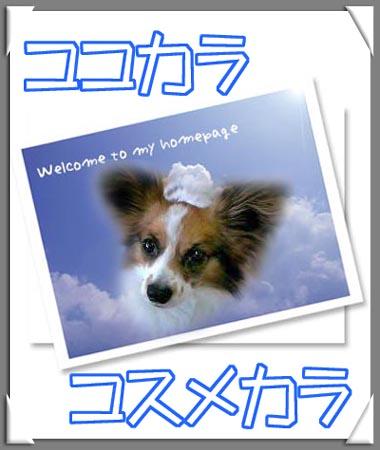 ウチの犬です。カワイイでしょ〜(笑)